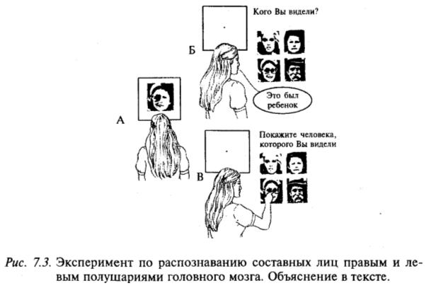 Эксперимент по распознаванию составных лиц правым и левым полушариями головного мозга