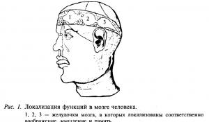 Локализация функций в мозге человека