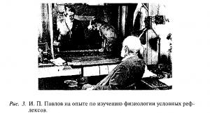 Павлов на опыте по изучению физиологии условных рефлексов