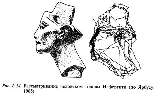Рассматривание человеком головы Нефертити (по Ярбусу, 1965)