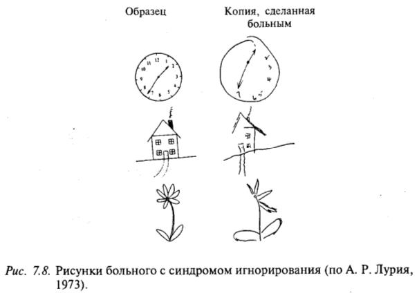 Рисунки больного с синдромом игнорирования (по А.Р. Лурия, 1973)