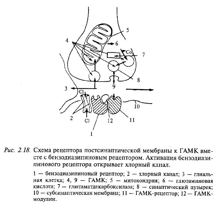 Схема рецептора постсинаптической мембраны к ГАМК вместе с бензодиазипиновым рецептором. Активация бензодиазипинового рецептора открывает хлорный канал