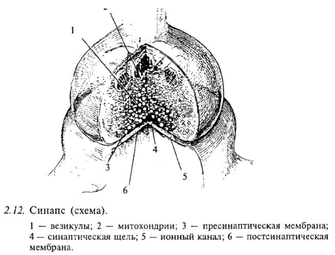 Синапс (схема)