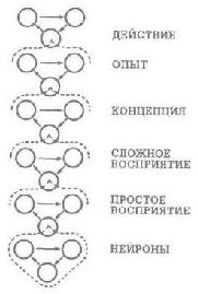 Рис. 40. Уровни организации