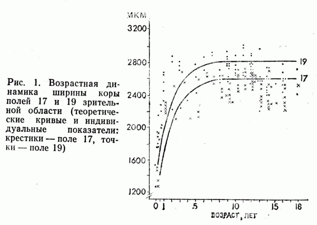 Возрастная динамика ширины коры полей 17 и 19 зрительной области (теоретические кривые и индивидуальные показатели: крестики - поле 17, нолики - поле 19)
