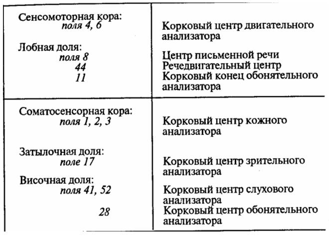 Цитоархитектонические поля коры больший полушарий (по К. Бродману). Описание полей 1