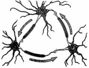 Схема реверберирующей нейронной цепи