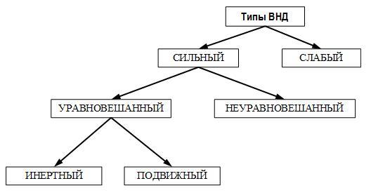 Типы ВНД