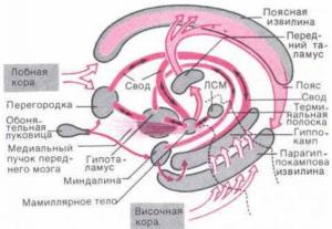 Схема взаимодействия структур круга Наута