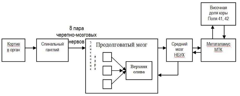 Схема слухового анализатора
