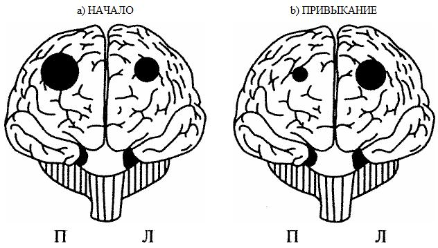 Рис.6.2. Лобные доли, полушария и новизна: а — новая задача активизирует преимущественно правую префронтальную кору; b — по мере того, как задача становится привычной, общий уровень активации падает и сдвигается с правых префронтальных областей к левым. (Адаптировано из: Gold J. М. et al. PET validation of a novel prefrontal task: Delayed response alteration // Neuropsychology. 1996. Vol. 10. P. 3-10.)