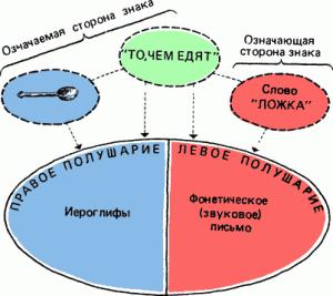 Рис. 10. Означаемая и означающая стороны знака и полушария мозга
