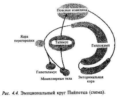 Эмоциональный круг Пайпетца (схема)