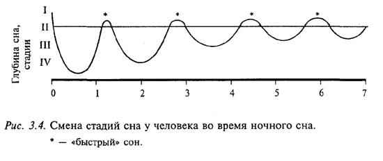 Смена стадий сна у человека во время ночного сна