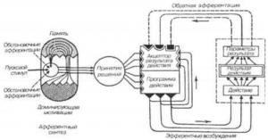 Функциональная система