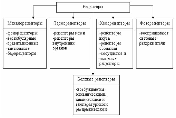 Рецепторы в зависимости от природы вида воспринимаемого раздражителя