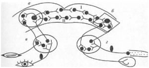 Схема дуги условного рефлекса с двусторонней связью (по Э.А.Асратяну)